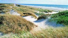 Duinen aan de westkust van Jutland