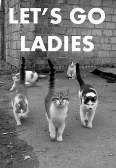 Cat | Ladies