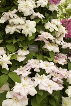 RHS Chelsea Flower Show – Focus on the Flowers! Garden Inspiration, Garden Ideas, Pink Garden, Chelsea Flower Show, Beautiful Flowers, Fun, Blush, Gardening, Outdoor