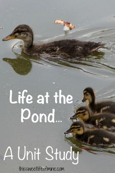 Life at the Pond... A Unit Study | thissweetlifeofmine.com