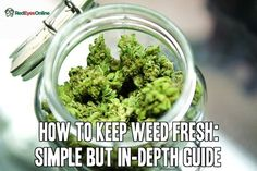 How to Keep Weed Fresh: Simple But In-Depth Guide From RedEyesOnline.net