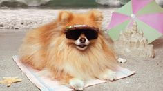 Dogs Need Sunscreen, Too! 7 Tips to Keep Your Dog Safe This Summer