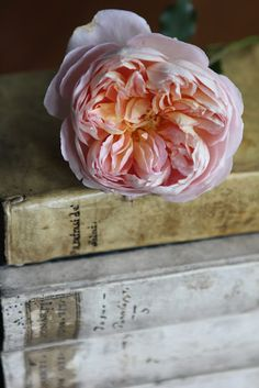 David Austin roses on top of old parchment books