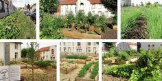 Plusieurs potagers urbains où les légumes sont à disposition des habitants Permaculture, Plantation, Outdoor Structures, Plants, Workshop, Action, Gardening, Gardens, Sustainable Development