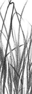 An art demonstration in negative drawing by Mike Sibley. Free online pencil lesson - drawing grass using negative drawing techniques. Drawing Lessons, Drawing Tips, Art Lessons, Acrylic Painting Techniques, Drawing Techniques, Grass Drawing, Color Pencil Sketch, Realistic Pencil Drawings, Black Pencil