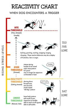 How To Deal With Aggressive Dog Behavior Problems - Dog Health Care and Information Dog Stress, Reactive Dog, Dog Body Language, Education Canine, Dog Information, Info Dog, Aggressive Dog, Dog Hacks, Dog Training Tips