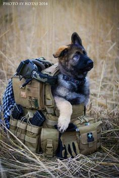 "Click visit site and Check out Cool ""German Shepherd"" T-shirts. This website is…"