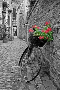 black and white photography with a touch of color / color splash / bicycle basket with flowers #whiteandblack