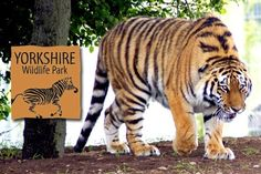 doncaster wildlife park - Google Search Wild Life, Wildlife Park, Yorkshire, Animals, Image, Google Search, Places, Animales, Animaux