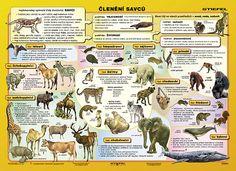 Výsledek obrázku pro systém živočichů