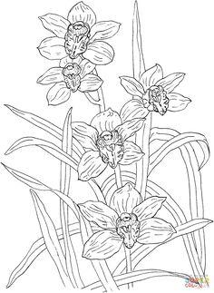 orchidee viele blumen malvorlage pinterest blumen zeichnen und malen. Black Bedroom Furniture Sets. Home Design Ideas