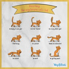 Where cat's are concerned tail's speak louder than words! Here is what your favorite feline is trying to tell, when they are twitching or swishing their tail! Im Crazy About You, Im Mad, Im Scared, Im Happy, Bond, Cats, I Am Happy, Gatos, I'm Happy