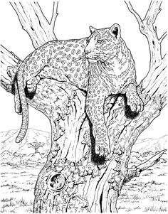 Leopards Coloring pages. Select from 31983 printable Coloring pages of cartoons, animals, nature, Bible and many more. Super Coloring Pages, Heart Coloring Pages, Tree Coloring Page, Animal Coloring Pages, Colouring Pages, Coloring Pages For Kids, Coloring Books, Animal Sketches, Animal Drawings