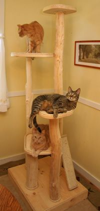 eco-friendly cat scratching post