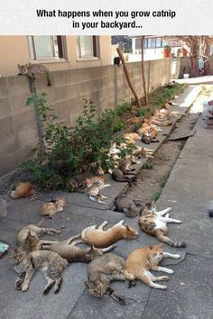 Who else is thinking of buying some catnip plants and starting a cool cats club?!