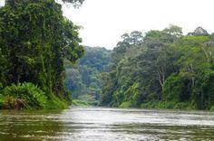 Rio San Juan - lush jungle and wildlife (boat trip down the river to Atlantic Ocean)