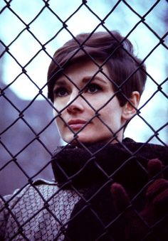 Wait Until Dark - audrey-hepburn Photo