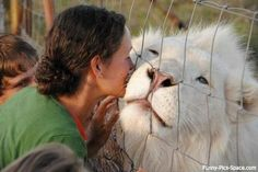 Awww....lion leans in for a kiss