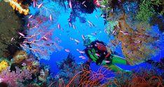 cozumel diving - Google 検索