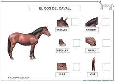 CAVALL projecte - Petitmón Recursos - Picasa Web Albums Horse Camp, Picasa Web Albums, Animal Books, Kids Education, Cool Kids, Activities For Kids, Horses, Google, School
