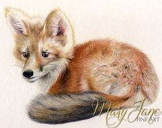 'baby Fox' a Colored Pencil Drawing by MaryJane Sky of www.maryjanefineart.com
