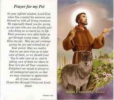 Prayers to St Francis of Assisi to help pets Francis Of Assisi Prayer, Saint Francis Prayer, St Francis, Pet 1, Cat Dog, Phteven Dog, Yorkshire Terrier, Dog Love, Puppy Love