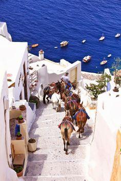 Santorini donkeys , Greece. 2013 I was thre but took the funicular since I felt sorry for the donkeys.