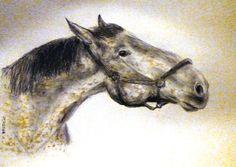 Horse44