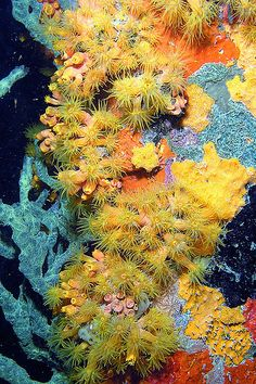 Sponge and Soft Coral which grows under the Bonaire town pier ~ By ejg1890