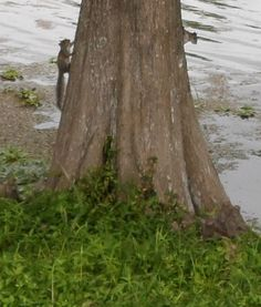 I caught two little squirrels playing tag by the river.  Cute!