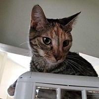 Pet Card Pets Cat Adoption Cute Animals