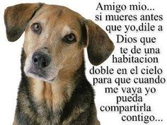 Si mueres antes...