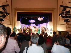 Catio, Concert, Concerts