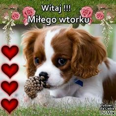 Good Morning Funny, Morning Humor, Polish, Pictures