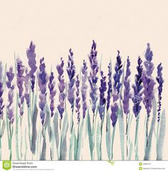 Lavender Flowers - Download From Over 48 Million High Quality Stock Photos, Images, Vectors. Sign up for FREE today. Image: 23622191