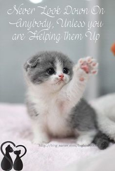 These lovely kittens will brighten your day. Cats are amazing creatures. - These lovely kittens will brighten your day. Cats are amazing creatures. Cute Cats And Kittens, I Love Cats, Crazy Cats, Kittens Cutest, Funny Kittens, Ragdoll Kittens, Tabby Cats, Bengal Cats, Cute Kitten Gif