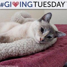 Help Celia the Miracle Cat