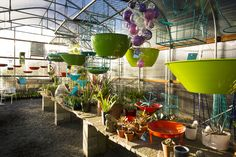 DIG Nursery: booth 1211 at the 2017 Day Trips, Places To Go, Things To Do, Planter Pots, Nursery, Garden, Claire, Wednesday, Seattle