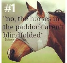 No The Horses In The Paddock Arent Blindfolded