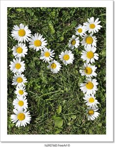 Free art print of Letters of daisies. Get up to 10 Gallery-Quality Art Prints for Free. Letter Art, Letters, Sunflowers And Daisies, Daisy Art, Best Photo Poses, Moon Photography, Free Art Prints, Small Art, Flower Art