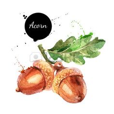 Vector: Hand drawn watercolor painting of acorn isolated on white background. Vector llustration of nut for your design Watercolor Fruit, Watercolor Cards, Watercolour Painting, Watercolor Flowers, Watercolors, Autumn Painting, Autumn Art, Acorn Drawing, Acorn Tattoo
