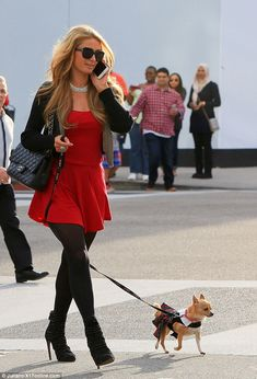 Paris Hilton dresses her tiny pet Chihuahua in a tartan kilt and collar