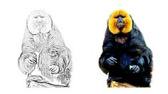Saki Monkey coloring page Zoo Animal Coloring Pages, Monkey Coloring Pages, Zoo Animals, Colored Pencils, Lion Sculpture, Statue, Art, Coloring, Colouring Pencils