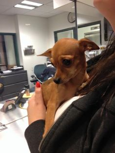 R Norwalk, CT Police Department Like This Page · 4 hrs · brown https://www.facebook.com/CT.Lost.Pets/posts/796744610447416   Do you know the owner of this little female chihuahua? She was found in the Flax Hill Arbor Area.