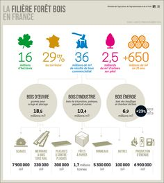 Infographie sur les forêts en France. Combien d'hectares représentent les forêts françaises? A quoi sert le bois récolté? Comment est réparti la filière bois en France? #infographie #foret #bois #pin