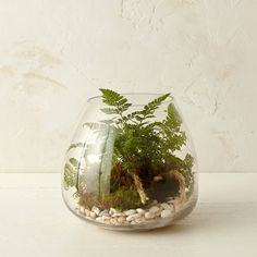 Sleek and simple, this flat-bottomed droplet terrarium makes a polished display for an abundant planting of ferns. - Glass - Hand wash - Indoor use only - Imported Small: diameter diameter mouth) Large: diameter diameter mouth) Buy Terrarium, Terrarium Supplies, Terrarium Containers, Glass Terrarium, Terrarium Ideas, Small Terrarium, Succulent Terrarium, Foliage Plants, Faux Plants