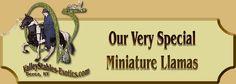 miniature llamas - Google Search