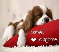 Good night my friend sweet dreams and God bless! Good Night Beautiful, Good Night Love Quotes, Good Night Prayer, Cute Good Night, Good Night Friends, Good Night Blessings, Sweet Night, Good Night Wishes, Good Night Sweet Dreams