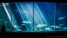 028 Two Oceans Aquarium