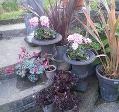 Lettstelte og fantastiske planter til terrassen? Her er noen forslag. Planters, Patio, Plant, Window Boxes, Pot Holders, Flower Planters, Pots